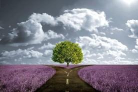 arbol entre dos caminos
